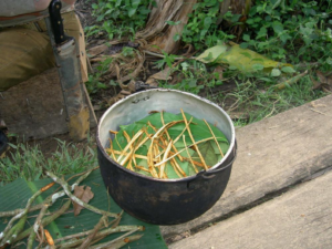 ayahuasca-is-ripping-of-indigenous