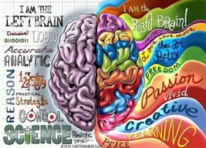 emisferi desto e sinistro del cervello