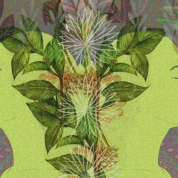 dieta sciamanica secondo la medicina tradizionale amazzonica