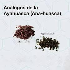 anahuasca